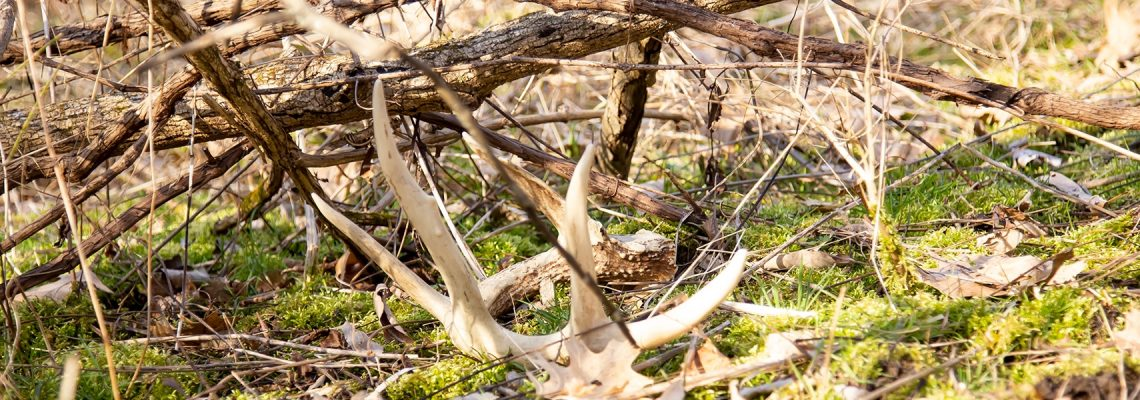 2019-Shed-Hunting-Feature